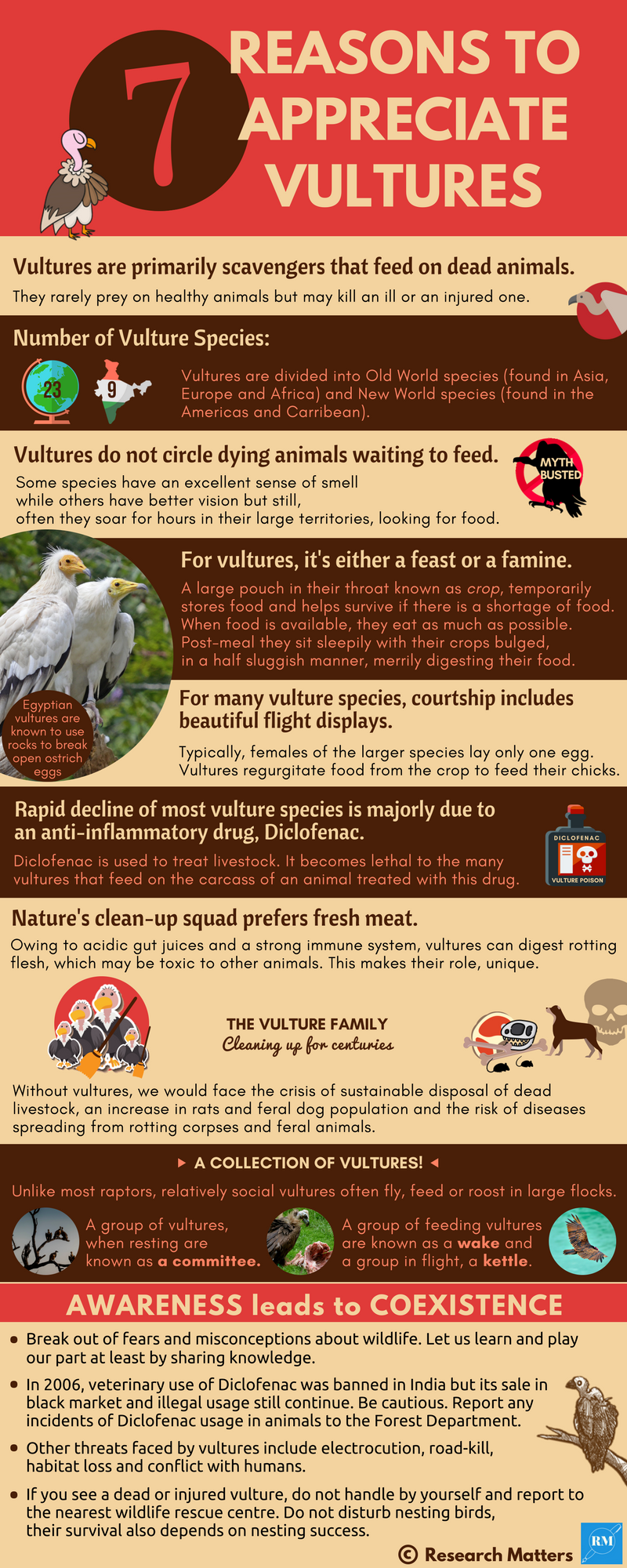 7 Amazing Reasons to appreciate Vultures