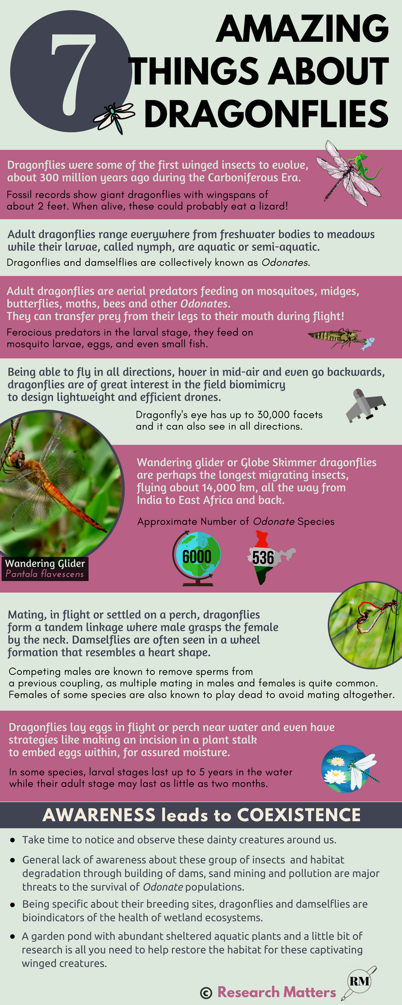 7 Amazing Things about Dragonflies