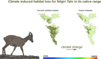 The projected loss in the habitat of the Nilgiri Tahr