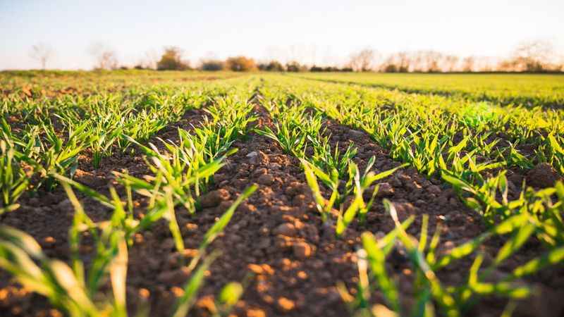 Soil check: How much water does your soil contain? - Research Matters