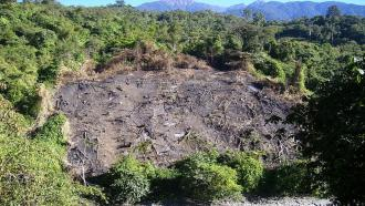 Tree-planting may help forests to recover faster after Jhum cultivation