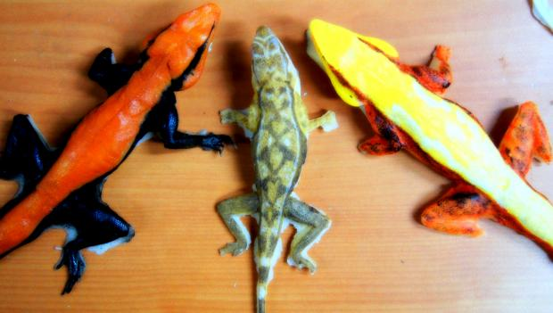 Artificial models of rock agamas from Prof. Thaker's lab