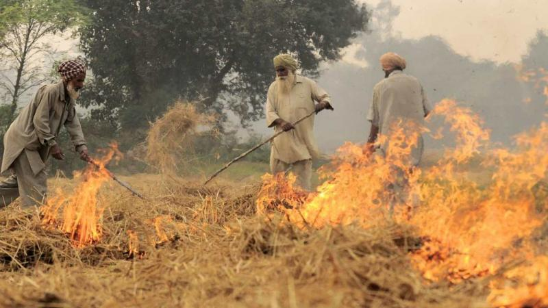 Researchers from The Nature Conservancy (TNC), USA, and collaborators from different institutes in India, discuss the agricultural practice of burning crop residues and find alternative solutions.