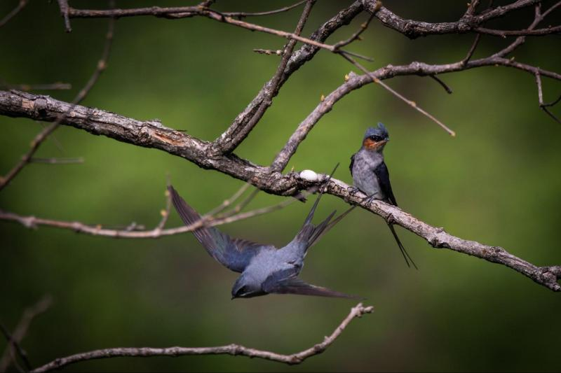 Nature's parenting paradox. Males, not females, may gain more by caring for their young