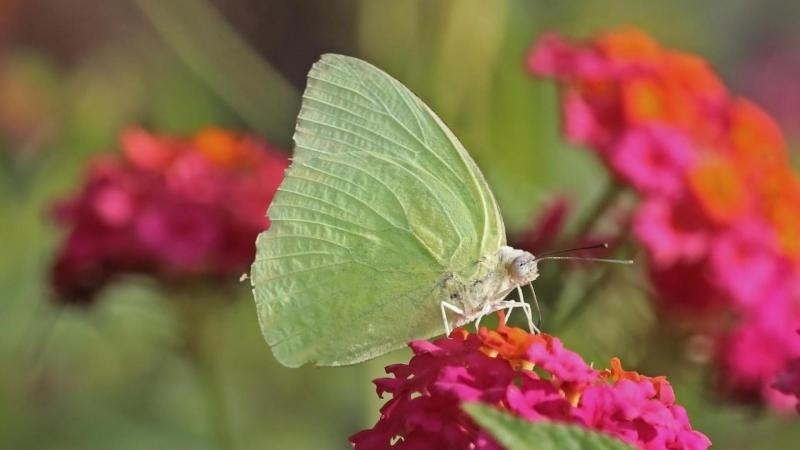 Amidst the alluring colour and scents, here's how butterflies pick their flower