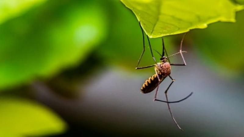 New technology could reduce delayed diagnosis and help differentiate malaria parasite species for effective treatment