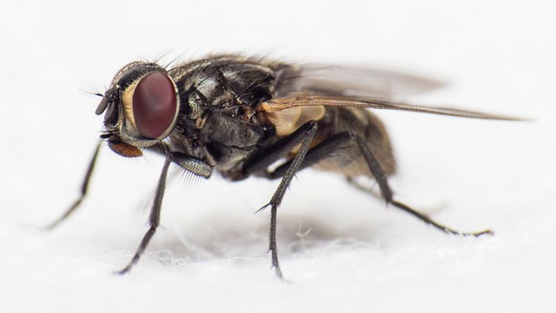 What flies can teach us about achieving the perfect landing, albeit upside down!
