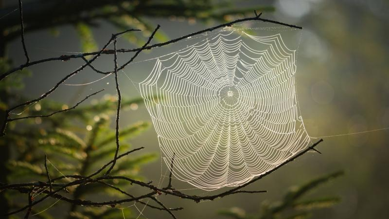 Weaving a web of wonder