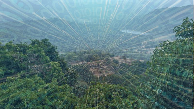 Here's how machine learning could help in choosing the best policy for forest management
