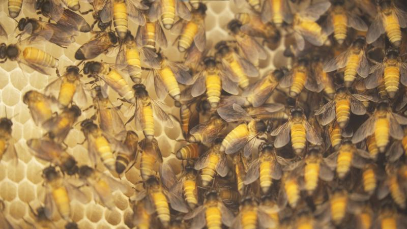 Toxic pollutants in the air are taking the toll on pollinating insects