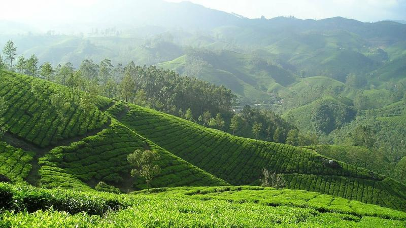 Researchers from IISER, Tirupati, ATREE, Bengaluru, Hume Centre for Ecology and Wildlife Biology, Kerala and The Gandhigram Rural Institute, Tamil Nadu, studied the changes to the Shola grasslands of the Western Ghats.