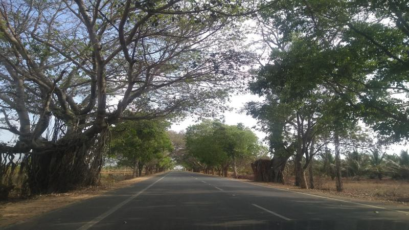 On a search for tough trees for rough Indian roads