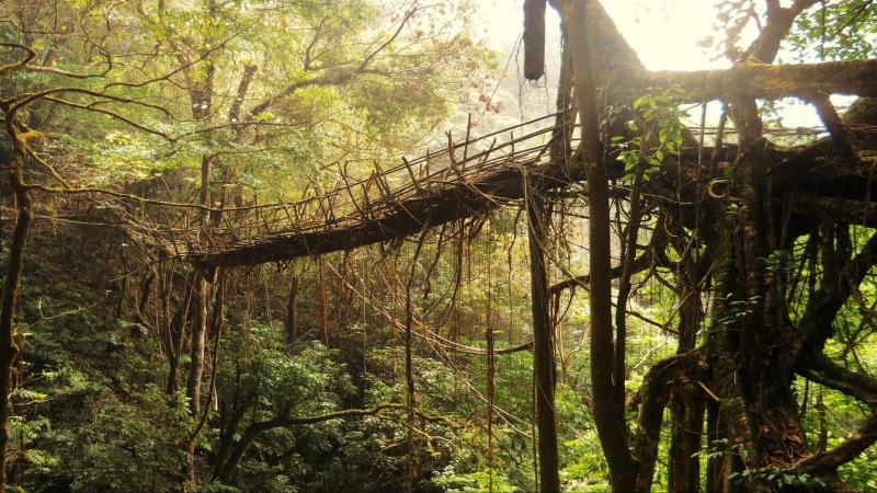 What cues do the root bridges of Meghalaya hold for futuristic architecture?