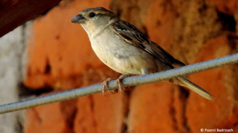 Among dwindling numbers, some bright spots for India's birds