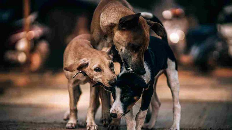 Could oral vaccines be the answer to India's rabies problem?