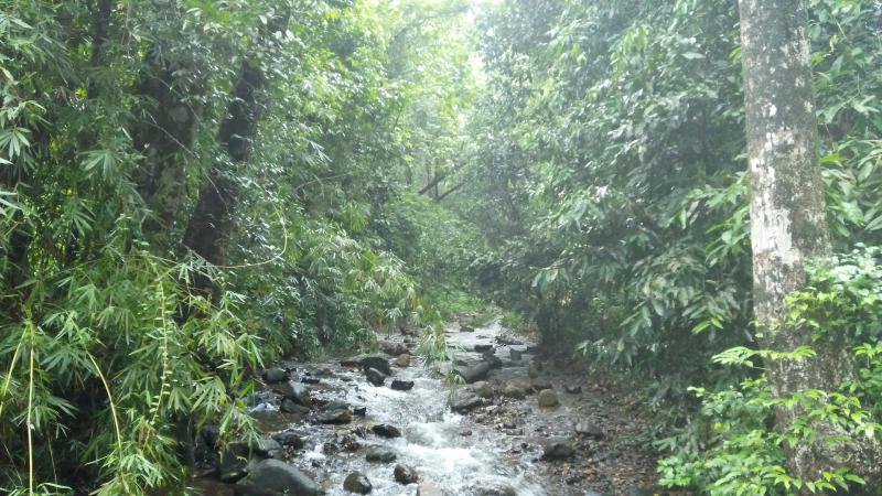 Planting native trees help degraded rainforest recover significantly in the Western Ghats