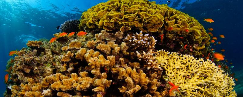 When sea corals act as climate archives