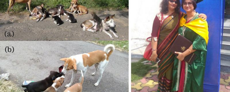 Pictures: Dr Manabi Paul and Prof Anindita Bhadra (a) a dog family that was part of this research  (b) a male dog (putative father) playing with pups  (c) The researchers: Dr Manabi Paul and Prof Anindita Bhadra