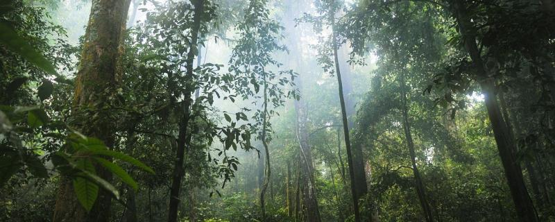 Researchers from Gubbi Labs and ATREE, Bengaluru, archived the regeneration of forests across eleven years in the Kalakkad Mundanthurai Tiger Reserve, Tamil Nadu.