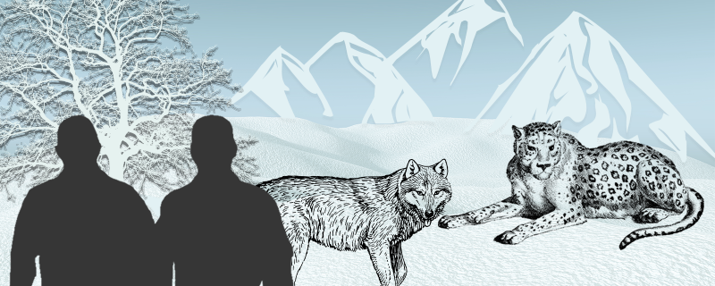 With snow leopards and wolves around, here's how Ladakh can reduce human–wildlife conflicts