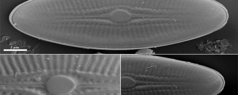 Tiny but mighty: Newly-discovered diatom from Meghalaya's cave puts the spotlight on these algae