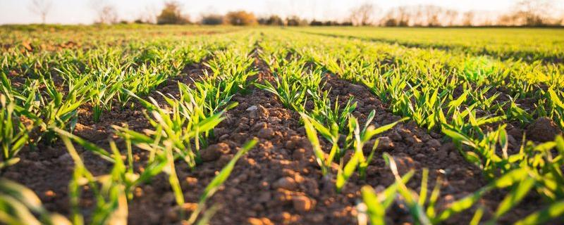 Soil check: How much water does your soil contain?